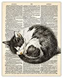 Sleeping Cat Dictionary Wall Art Print: Unique Room Decor for Boys, Men, Girls & Women - (8x10) Unframed Picture - Great Gift Idea Under $15