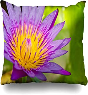 Ahawoso Throw Pillow Cover Decorative Square 18x18 Pink Aquatic Flower Nature Egypt Seed Pure Semen Parks Beautiful Blooming Flora Chinese Blossom Lily Zippered Pillowcase Home Decor Cushion Case