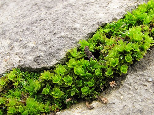 Moss Sex and Peat's Engineered Habi…