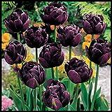 Exótico,PlantacióN En Interiores Y Exteriores De Bulbos Perennes,IncreíBles,Flores Florecientes,Plantas En Macetas,Especies Fragantes,Bulbos de tulipán-15 Bombillas,3