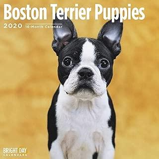 2020 Boston Terrier Puppies Calendar 16 Month 12 x 12 Wall Calendar by Bright Day Calendars