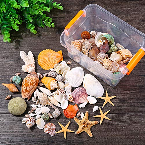 JYHF Sea Shells with Starfish Various Sizes Natural Seashells Starfish for Beach Theme Party Wedding Decorations DIY Crafts Home Decorations Fishtank Supplies(Approx 40 Pieces)