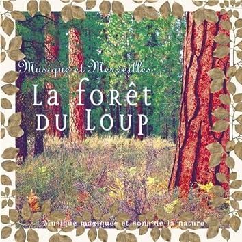 Musique et merveilles: la forêt du loup