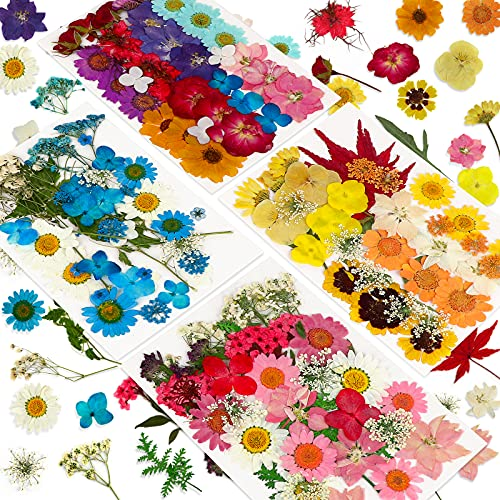 146 PCS Real Natural Dried Pressed Flowers for Resin,Dry Flower Bulk Natural Herbs Kit for Candle,Epoxy Resin,Soap Making,Scrapbooking,DIY Art Crafts,Painting