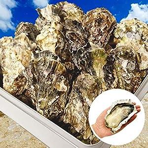 牡蠣 カキ かんかん焼き セット 広島県産殻付き 総量約3kg 大粒LLサイズ 20~23個入 冷凍 ( 軍手 ナイフ 調理説明書付 ) 海鮮 バーベキュー セット BBQ ガンガン焼き (通常商品)