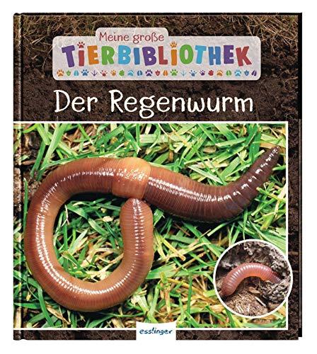 Meine große Tierbibliothek: Der Regenwurm: Sachbuch für Vorschule & Grundschule