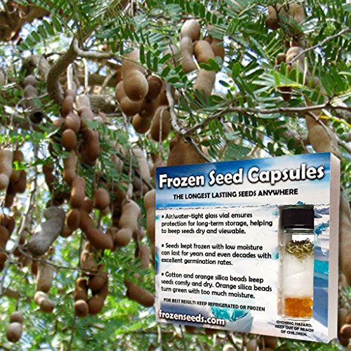 Tamarind Seeds (Tamarindus indica) 5+ Medicinal Herb Seeds + FREE 6 Variety Seed Pack - a $29.95 Value!! Packaged in FROZEN SEED CAPSULES for Growing Seeds Now or Saving Seeds