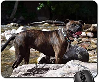 Gaming Mouse Pads,Mouse mat,Staffordshire Bull Terrier Bull Terrier Brindle