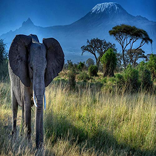 N / A Elephant Animal Kilimanjaro Landscape Oil Painting On Canvas Poster and Printed Abstract Painting for Living Room Mural Frameless 60x120cm