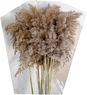 Green Orchid Reed Flower Natural Dried Flower Art Flower Arrangement Family Decoration (Dark Brown)