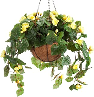 Best yellow begonia hanging basket Reviews