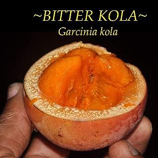 Bitter Kola Garcinia Kola African Aphrodisiac Fruit Tree Live Small Potd Plant HD7