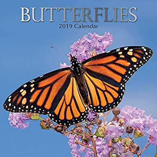 2019 Wall Calendar - Butterfly Calendar, 12 x 12 Inch Monthly View, 16-Month, Insects Theme, Includes 180 Reminder Stickers