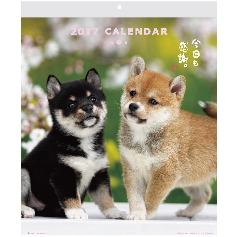 羊飼い燃料前アクティブコーポレーション 2017年 犬 カレンダー 壁掛け ACL-01
