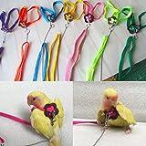 Girasool 1 arnés de pájaro y correa para loro, color...