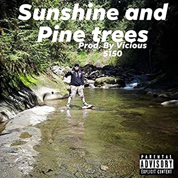 Sunshine and Pinetrees