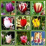 9 colores de semilla de 450 perfumes tulipán (50 semillas cada color) de la flor de alto grado de semillas de bonsái, más bella y plantas de tulipanes de colores
