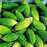 (100pcs Seeds) Portal Cool Green Bitter Gourd Seeds Bitter Melon Seeds Original Genuine Balsam Pear Seeds