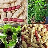zhouba - semi di arachidi per piante da giardino, 10 pezzi/1 confezione da 10 pezzi