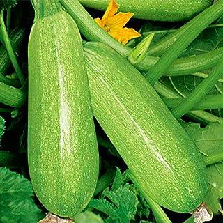 20 Seeds Calabac¨ªn Redondo Verano Squash ?nico Jard¨ªn Reliquia Calabaza