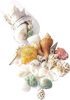 Sea Shells Mixed Ocean Beach Seashells-(8.5oz) 1
