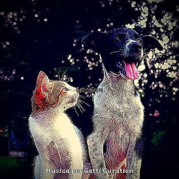Gattini Grave
