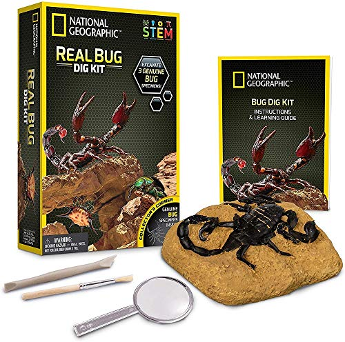 NATIONAL GEOGRAPHIC Real Bug Dig Kit - Dig up 3 Real Insects including Spider, Fortune Beetle and Scorpion