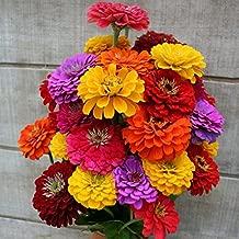 Zinnia Seeds - California Giants - Ounce, Red/Pink/Orange/Yellow/White/Purple Flowers