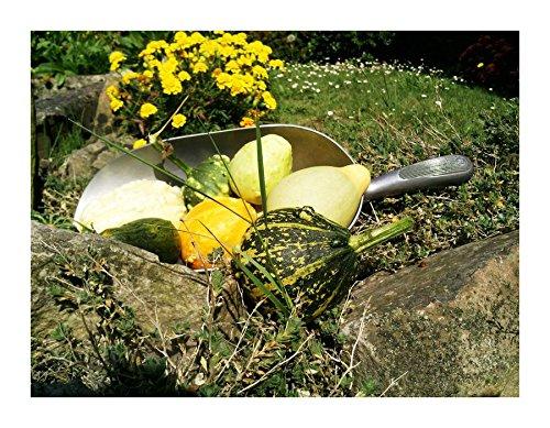 Les Graines Bocquet - Graines De Coloquinte À Petits Fruits En Mélange - Graines Potagères À Semer - Sachet De 3Grammes