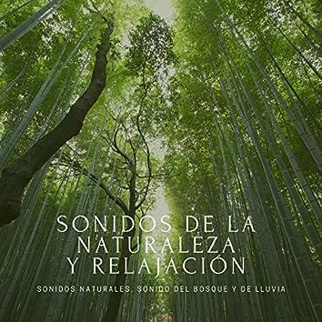 Sonidos de la Naturaleza y Relajación – Sonidos Naturales, Sonido del Bosque y de Lluvia