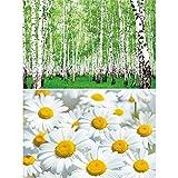GREAT ART 2er Set XXL Poster – Sommer Wiese & Wald –