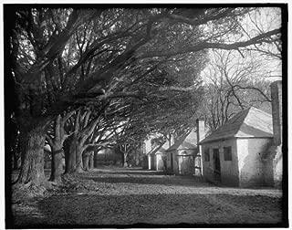Photo: Darkey cabins under oaks,plantations,slaves,Hermitage,Savannah,Georgia,GA,1900
