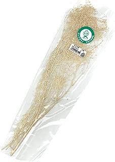 タケダ かすみ草 白 小束 長さ約350mm