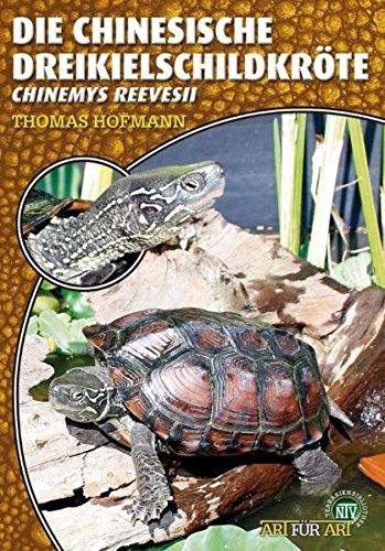 Die Chinesische Dreikielschildkröte: Chinemys reevesii (Art für Art / Terraristik)