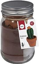 Rayher BP: Cactus, poliéster, Multicolor, 7.5x 7.5x 12.7cm, 6Unidades de Medida