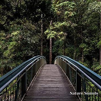 Nature Sounds, Sleep Music, Nature Sleep Music, Nature Noises, Vol. 1