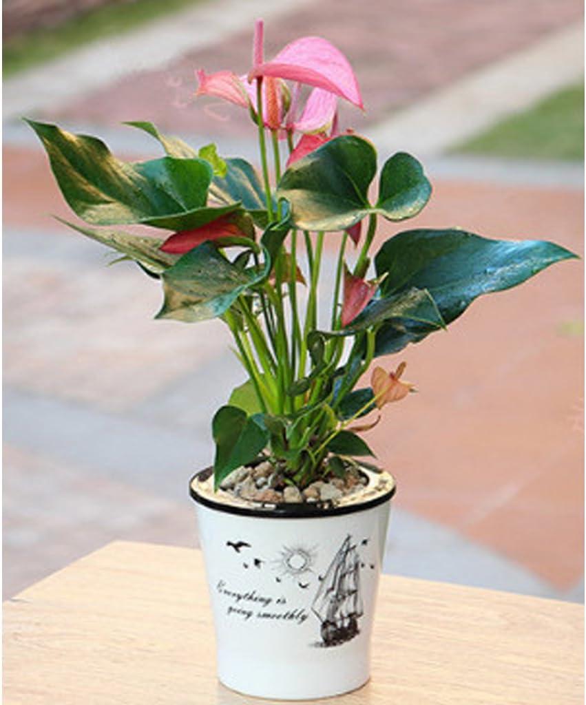 S Wei/ß F Fityle Selbstbew/ässerung Blumentopf Pflanzen Plastikpflanzer Topf Hausgarten