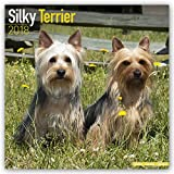 Silky Terrier Calendar - Dog Breed Calendars - 2017 - 2018 wall Calendars - 16 Month by Avonside