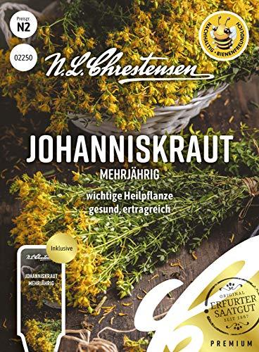 Johanniskraut Mehrjährig, wichtige Heilpflanze, bienenfreundlich, Samen