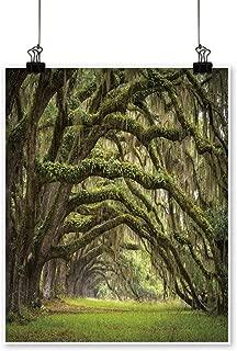 Best live oak painting Reviews