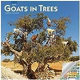 Goats in Trees Kalender 2020 Set – Deluxe 2020 Ziegen Wandkalender mit über 100 Kalenderaufklebern (lustige Geschenke, Bürobedarf)