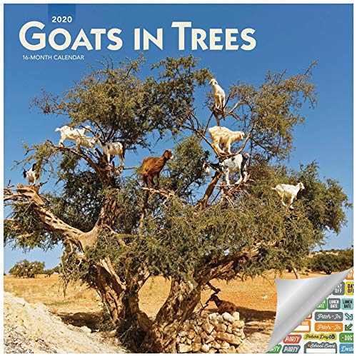 Goats in Trees Calendar 2020 Set - Deluxe 2020 Goats Wall Calendar with Over 100 Calendar Stickers (Funny Gifts, Office Supplies)