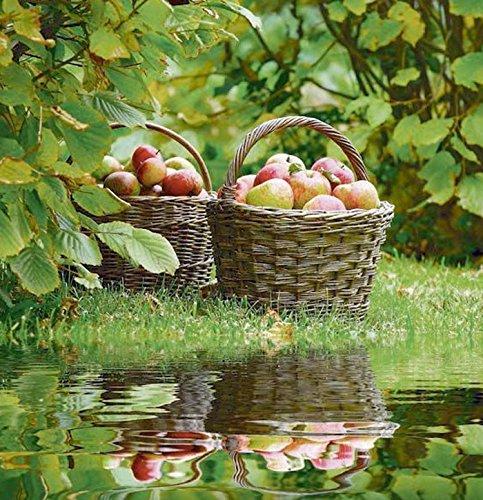 AS4HOME Outdoor Textilposter Äpfel Garten Poster aus Stoff ca 95 x 95 cm Ladendeko