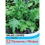 Salad Leaves Speedy Mix Half-Hardy Annual Seeds (500 Seeds) by Thompson and Morgan