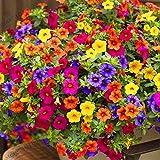 Pinkdose ! Genuine Hanging petunia bonsai, balcone in vaso Petunia di trascinamento del fiore del giardino, piante pacchetto originale di circa 200 particelle, 1JEPYN: 1