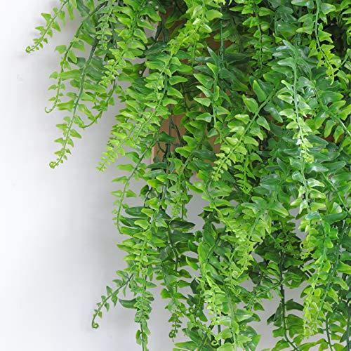ASHINER Plantas