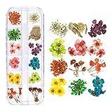 Pure Vie 12 Colores 3D Nail Glitter Flor Natural Seca para Uñas Decoración de Arte de Uñas Exquisito Joyas Brillantes Preciosas de Flor Verdadera - Flores