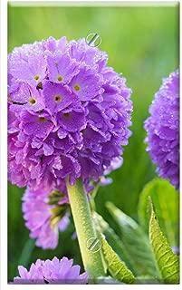 Single-Gang Blank Wall Plate Cover - Flower Purple Primrose Flower Pr mula Denticulata