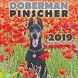 Doberman Pinscher 2019 Mini Wall Calendar