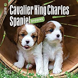 Cavalier King Charles Spaniel Puppies 2018 Calendar (英語) カレンダー[Browntrout Publishers/Amazon]